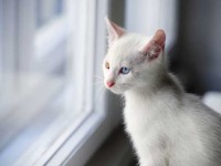 white-cat-at-window